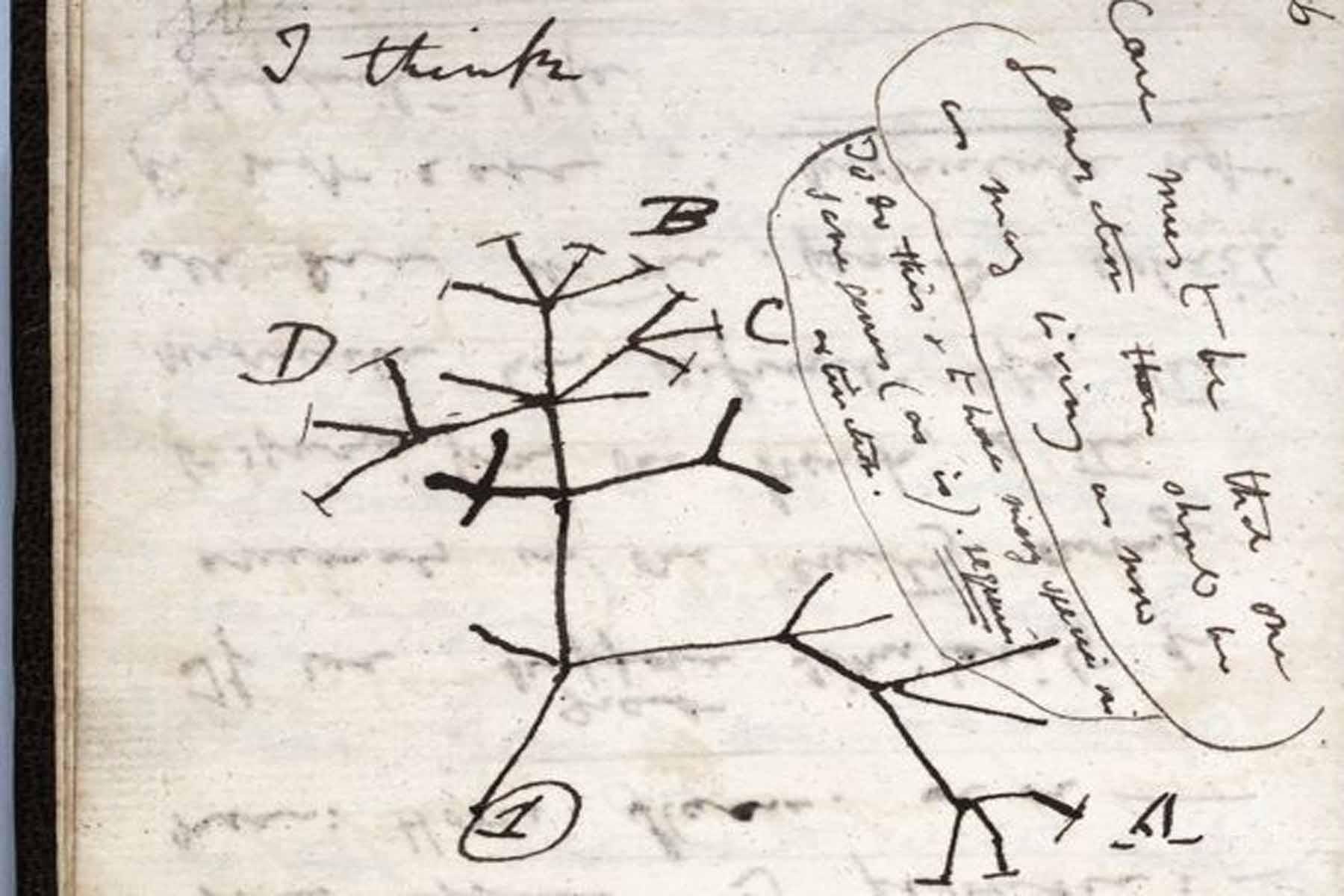 Gempar!!! Buku nota Charles Darwin dicuri dari Universiti Cambridge