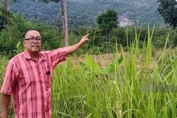 Gempar!!! Penduduk Sik teruja penemuan REE di Bukit Enggang