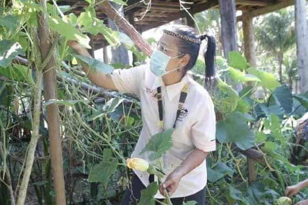 Dari penari berubah menjadi pengusaha kebun sayur