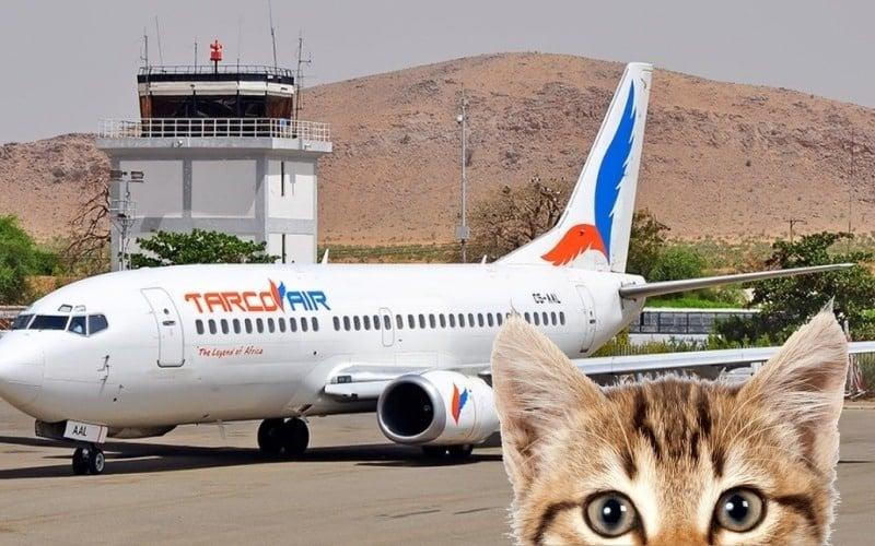 Seekor kucing serang juruterbang! terpaksa mendarat cemas
