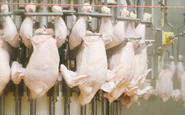 Kilang ayam di Tanjong Karang ditutup empat hari