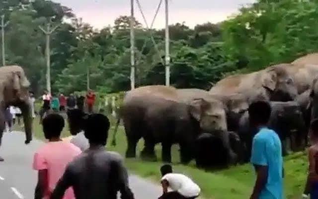 Cari pasal kacau gajah melintas, lelaki maut dipijak